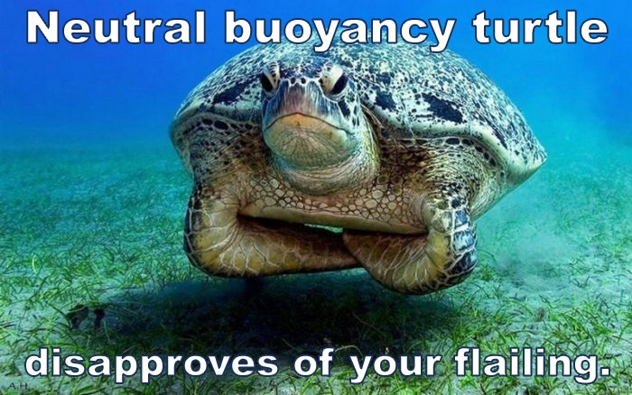 Open Pool Days & Buoyancy Clinics